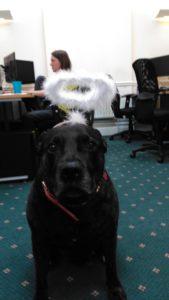 ladychristmasdog